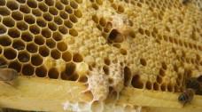 Méhpempő vásárlás regisztráció nélkül